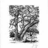 """Günter Grass """"In der Heide"""""""